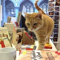 Kat Boekhandel Mechelen Salvator overleden