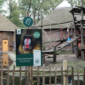 Na de presentatie was het tijd om de nieuwe audiotour langs het bonobo-vertrek te volgen. Gesponsord door het Jane Goodall Institute, naar aanleiding van het boek óók ingesproken door Miryanna van Reeden